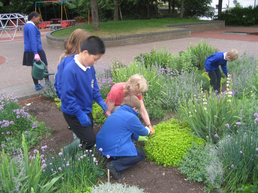 Playground herbs and flowers cared for by St Andrews School children